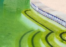 How to Get Algae Out of Pool feature