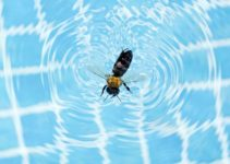 How to Keep Bees Away from Pool with 5 DIY Steps Safely and Effectively