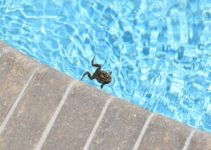 How to Keep Frogs Out of Pool with Only 5 Easy Steps | DIY Tutorial