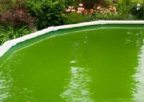how to clean a green above ground pool feature