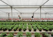 Greenhouse Gardening Mistakes that Beginners Make