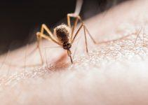 Is It True That Mosquito Problems Are On The Rise?