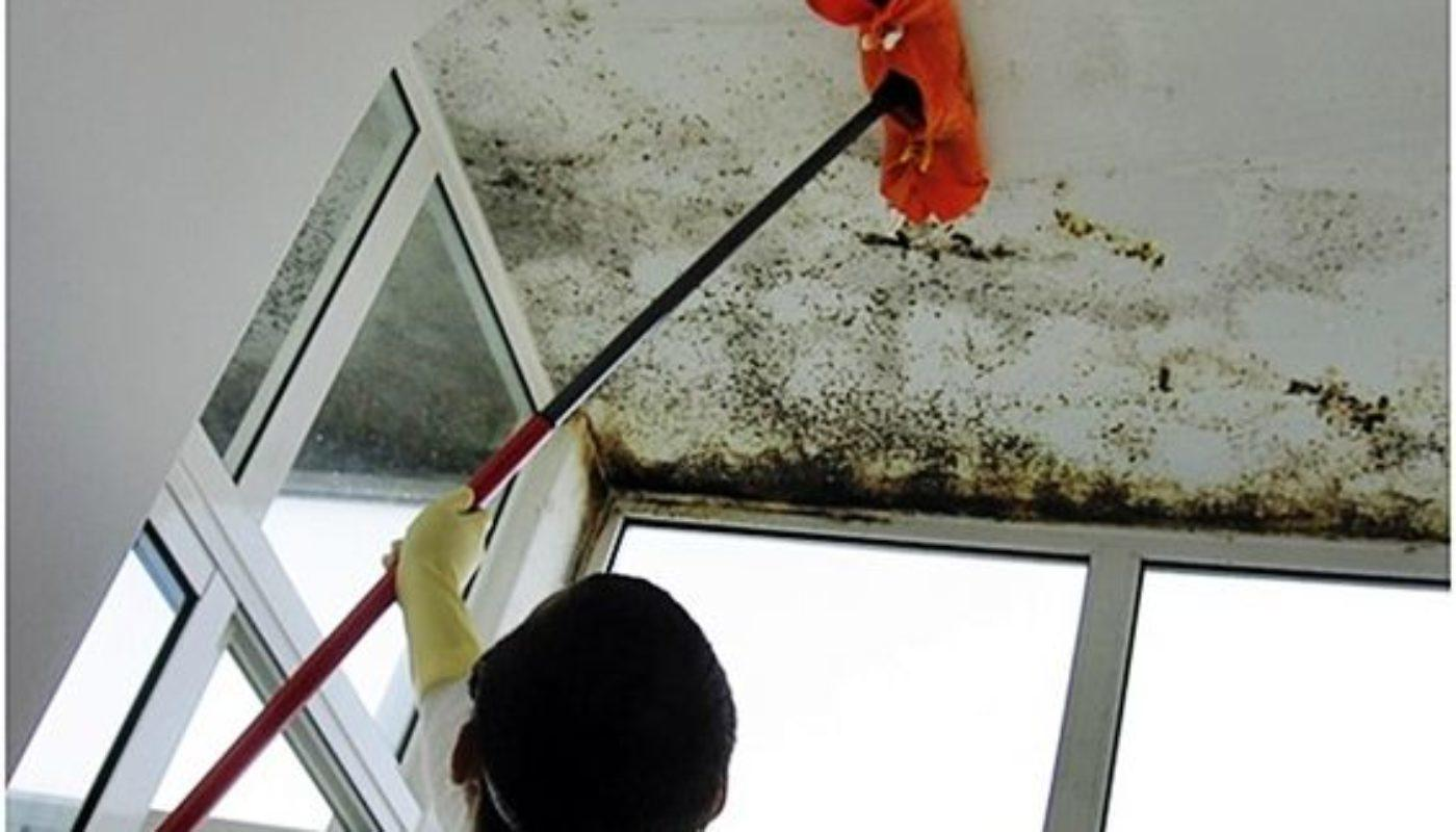 How To Remove Mold From Bathroom Ceiling 5