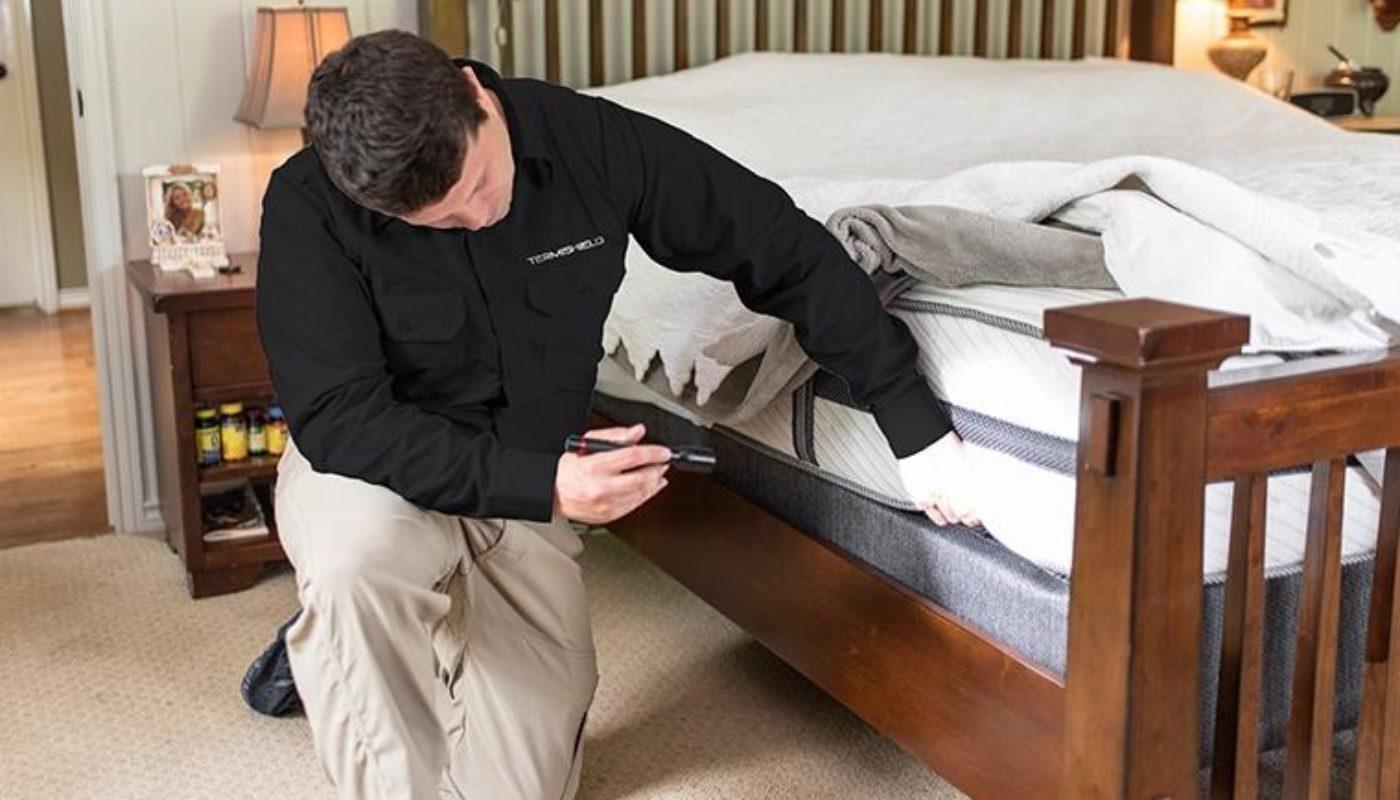 How to Get Rid of Weevils In My Bedroom 1