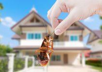 5 Ways To Keep Your Home Pest-Free