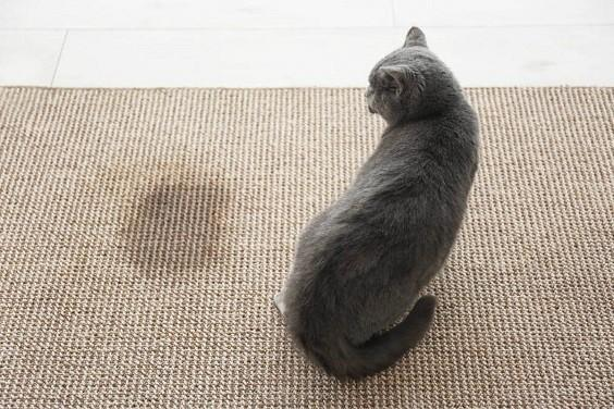 How to Clean Cat Pee
