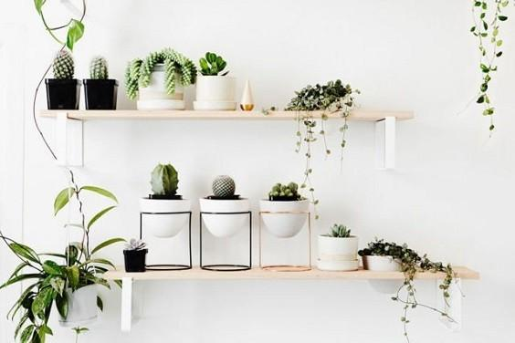 How to Decorate a Bedroom with Plants 3