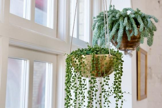 How to Decorate a Bedroom with Plants 4