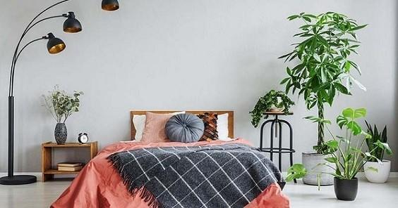 How to Decorate a Bedroom with Plants