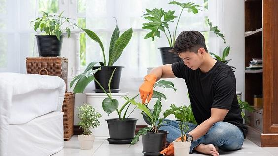 How to Take Care of Indoor Plants 1