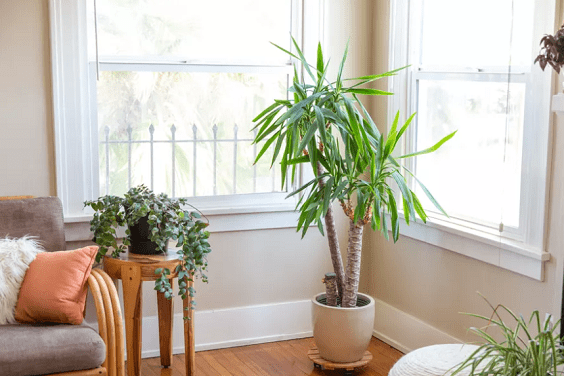 How to Take Care of Indoor Plants 2