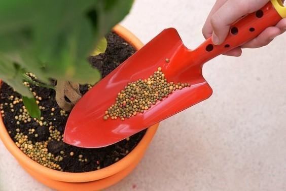 houseplant fertilizer