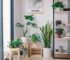 4 Easy and Simple Steps How to Take Care of Indoor Plants