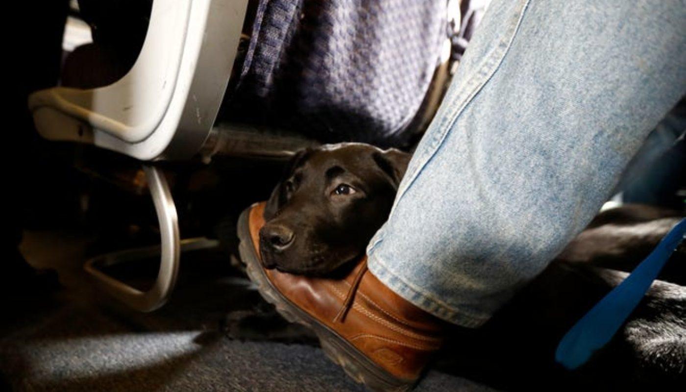 How Do Dogs Go to the Bathroom On a Plane 1