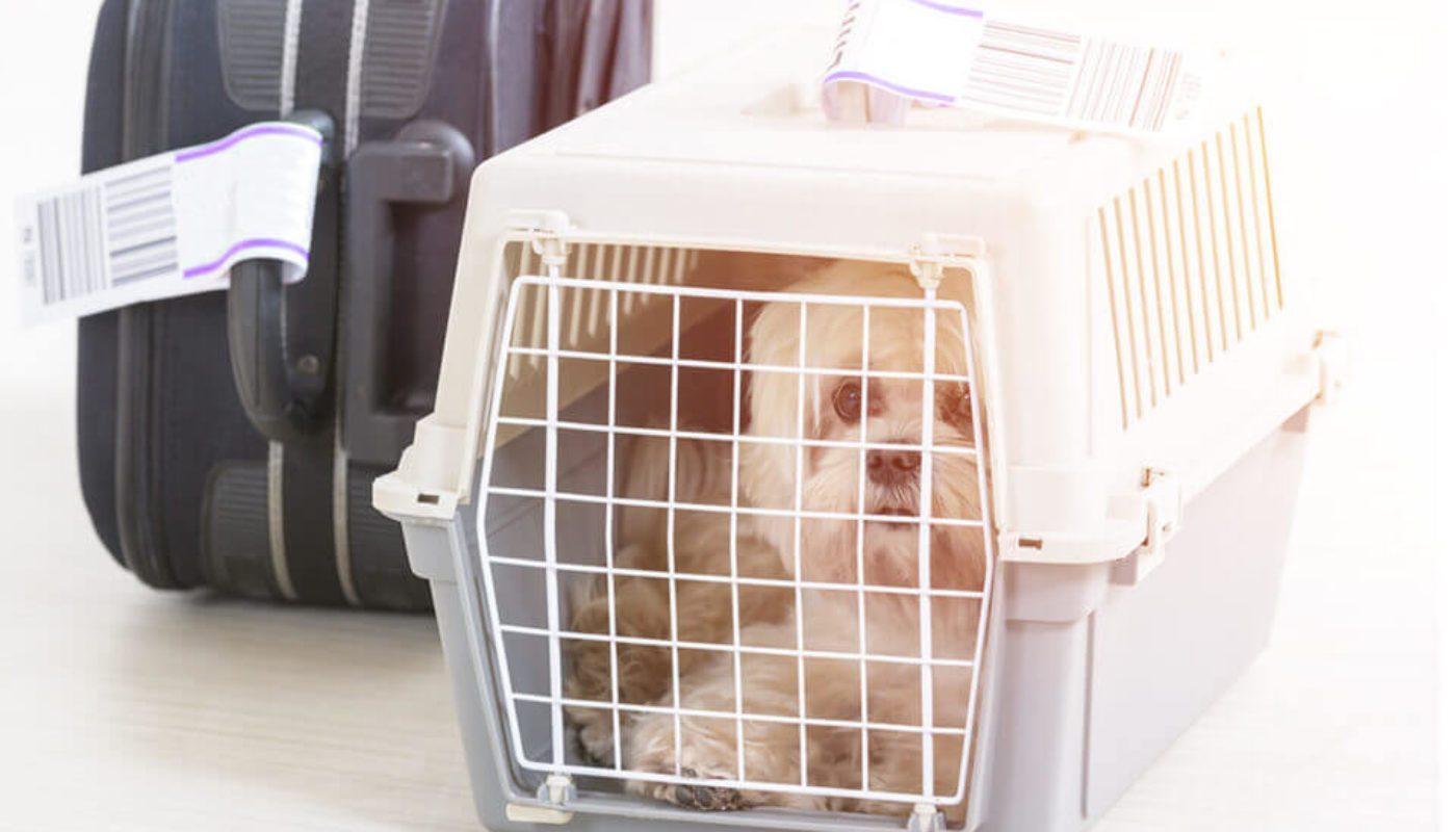How Do Dogs Go to the Bathroom On a Plane 2