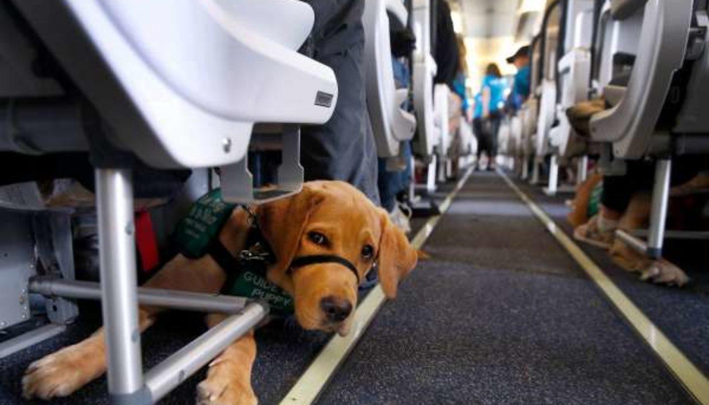 How Do Dogs Go to the Bathroom On a Plane 3