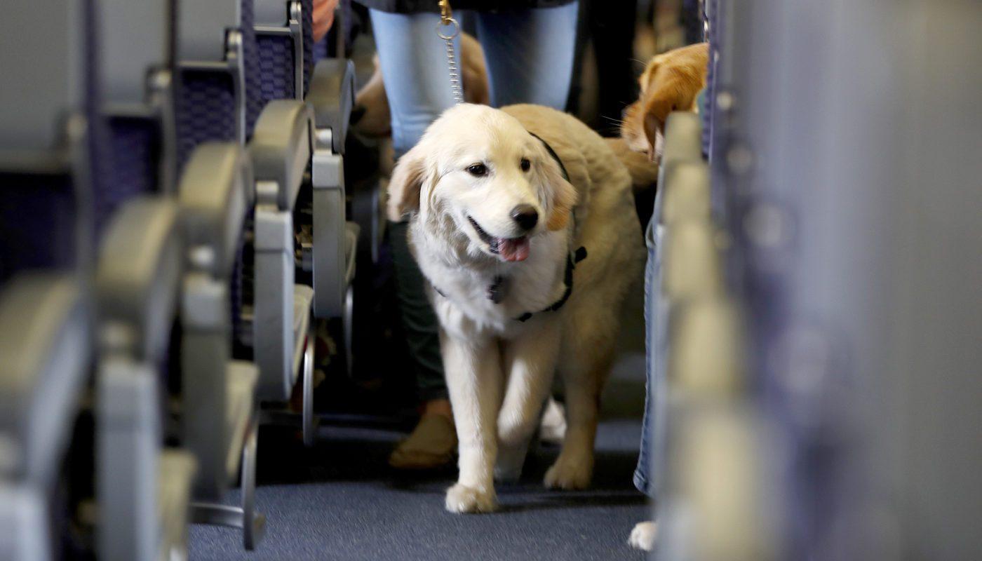 How Do Dogs Go to the Bathroom On a Plane 4