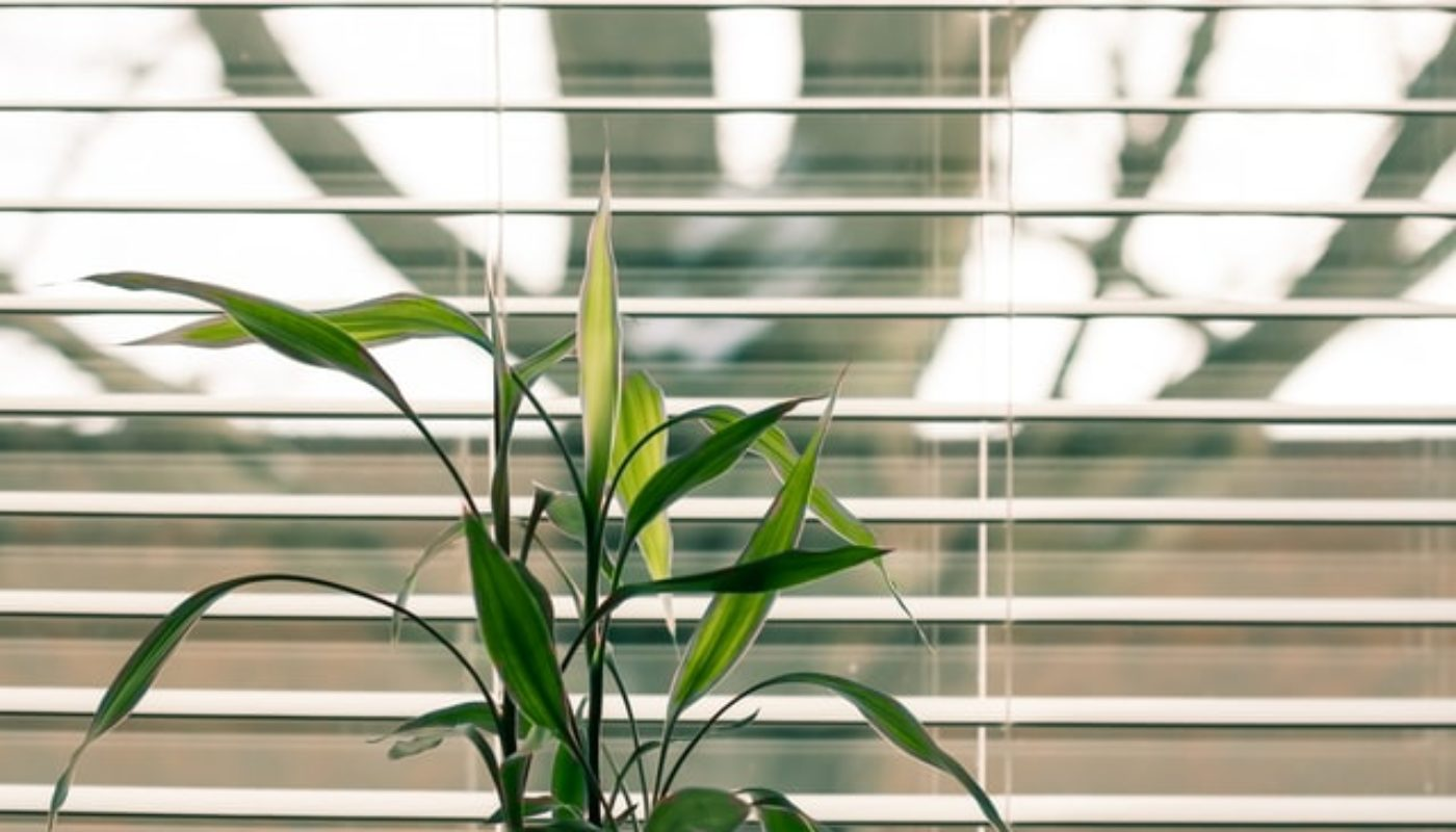 3 Ways To Properly Maintain Your Home Blinds