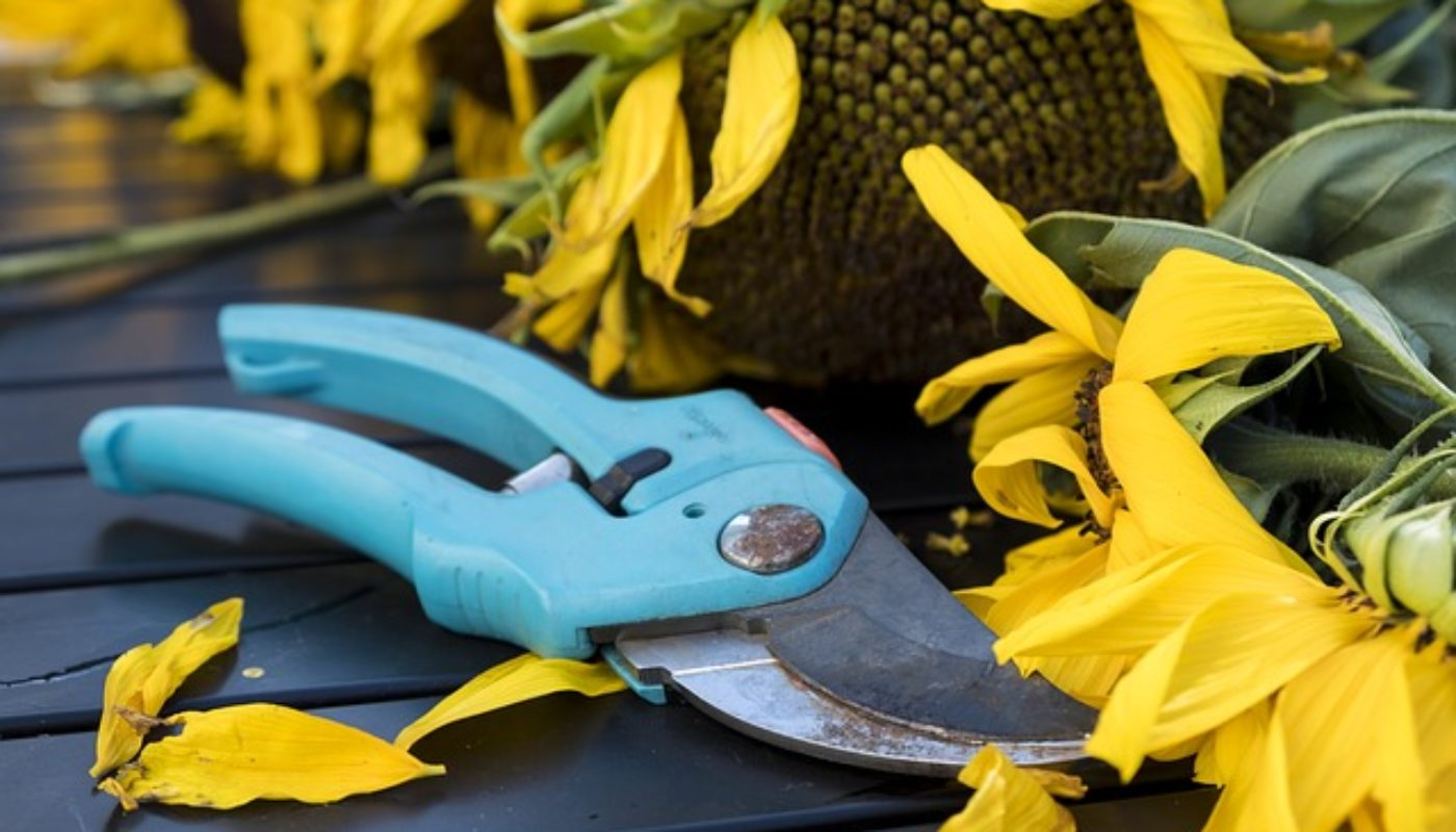 Top Tools You Need For Your Garden