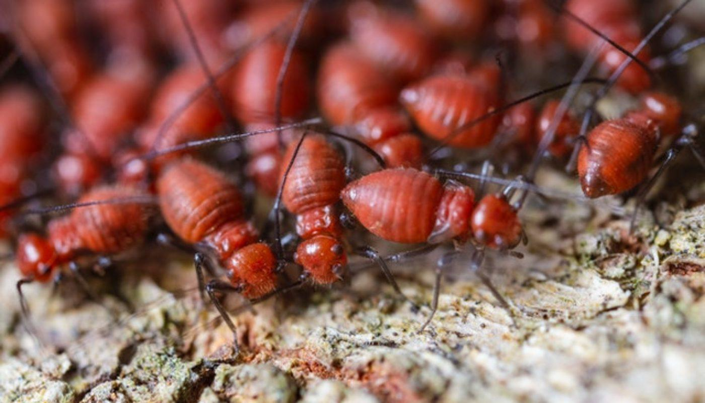 How To Tell If There Are Termites In Your Furniture