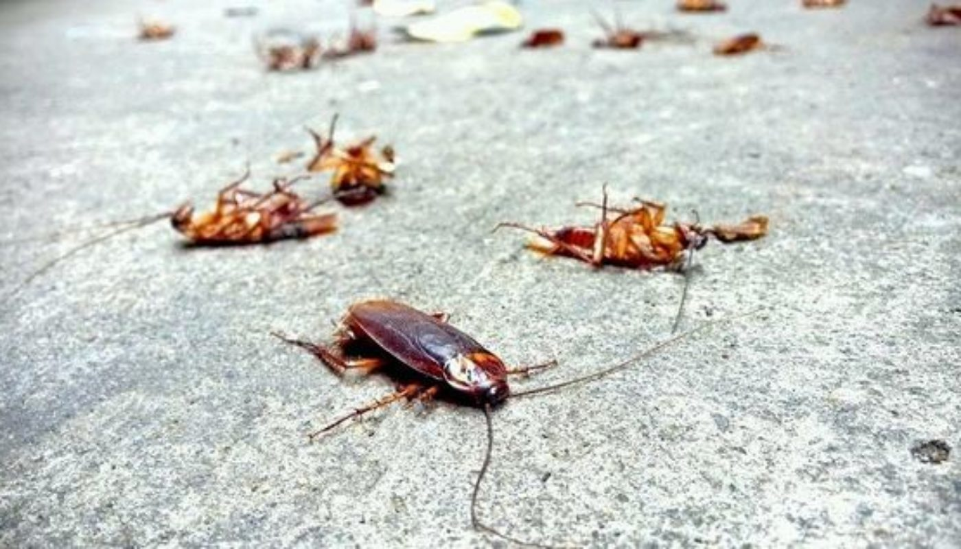 How to Prevent Cockroaches In Bedroom 1