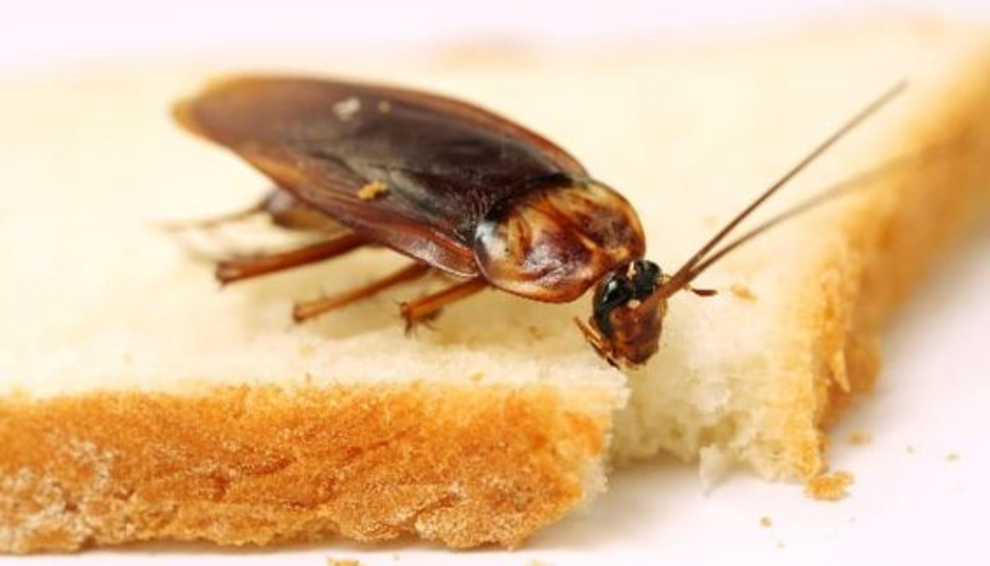 How to Prevent Cockroaches In Bedroom 2