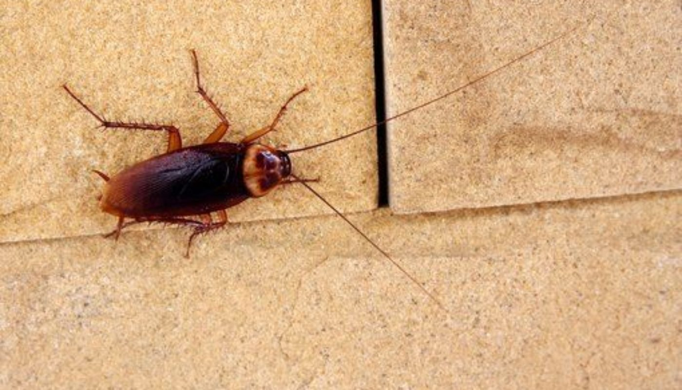 How to Prevent Cockroaches In Bedroom 3