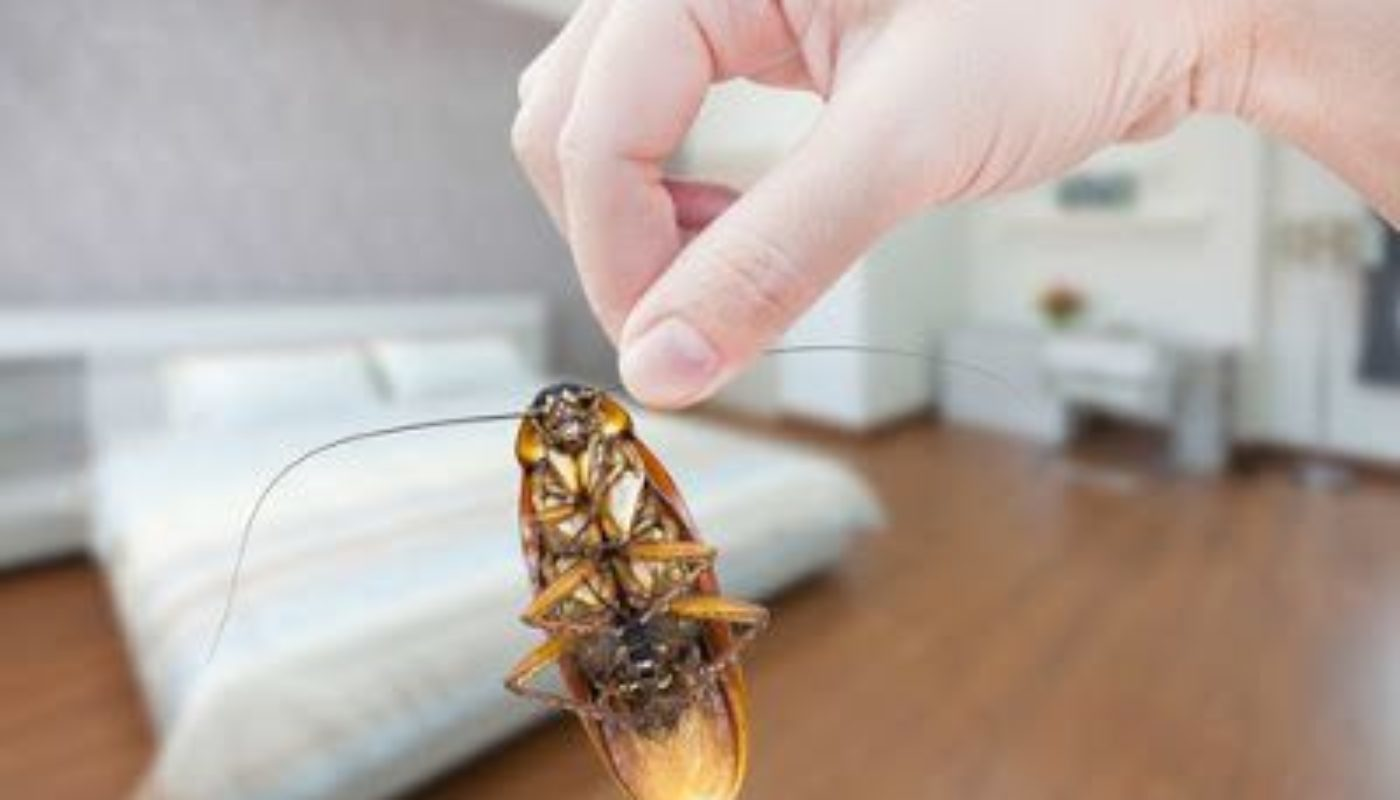 How to Prevent Cockroaches In Bedroom