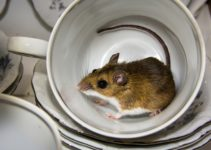 How to Pest-Proof the Kitchen: 5 Easy Tips